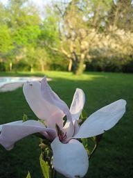 Magnolia_terrain_OK_16