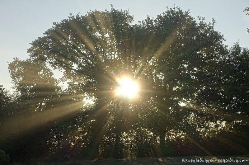 automne soleil