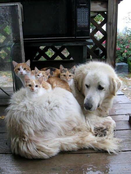 chat chien_1416449549_n