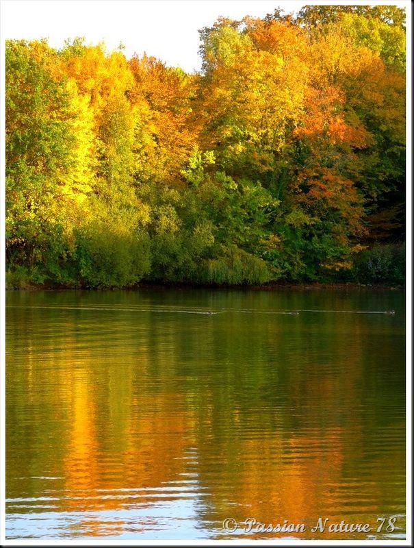 L'étang d'Or (10)