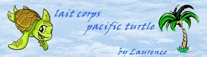 lait_corps_pacific_turtle