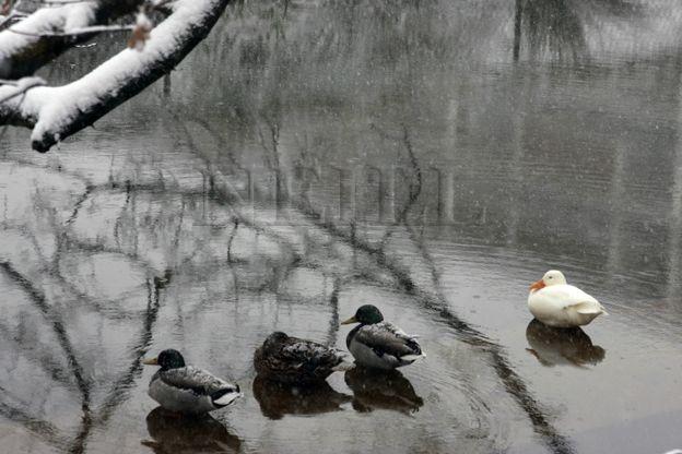 neige bel abord 12 mars 2013 (3)