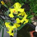 fleurs 092