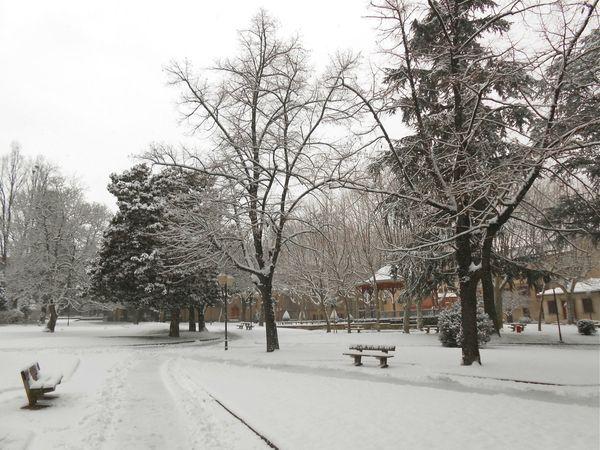 neige (6) 15 janv 2013