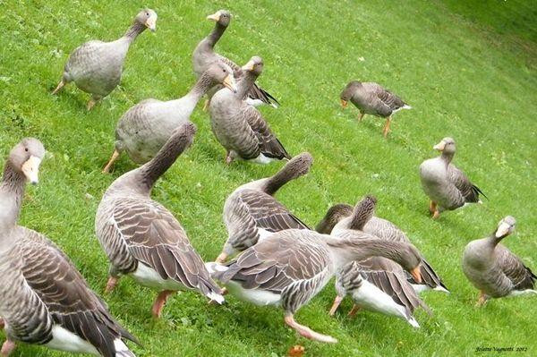 Parc Tête d Or-2012-10-14-11-50-36