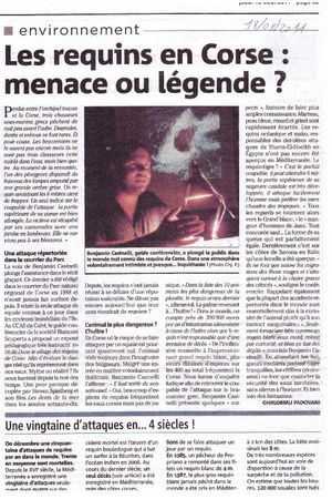 requin en corse article