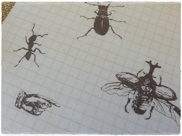 insectes5