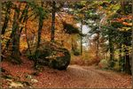 forets_automne_f5_big