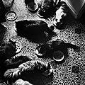 chats-paris-photos-Henri-Cartier-Bresson1