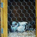 10- Le pigeonnier, détail