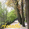 Treelined path, Minnewater Park, Bruges,