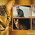 L'egyptian mau