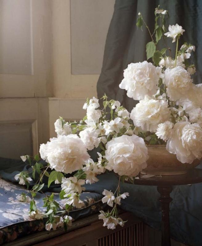 doc vi fleurs (1)