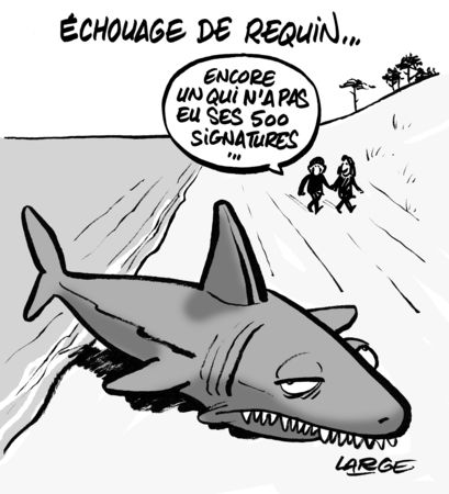 requin_large