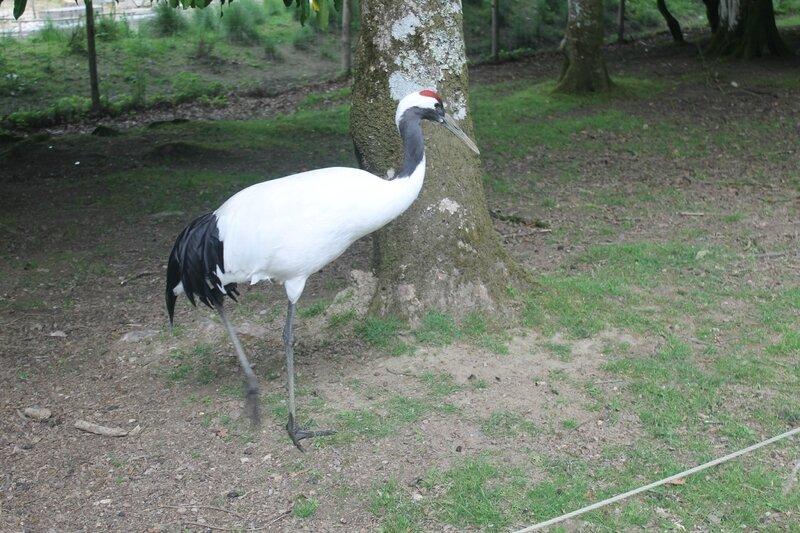 parc ornthologique de Branféré