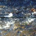 Un glaçon sur la rivière