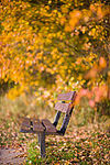 automne_5