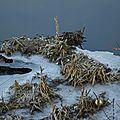 Territoire gelé le long de la vilaine à rennes le 20 janvier 2017 (2)