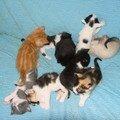 2008 04 12 Les 9 petits chatons, ceux de Blanco à 3 semaines rt ceux de Papillon à 1 mois (2)
