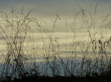 Les herbes passées