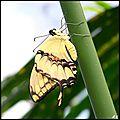 Canopy 14