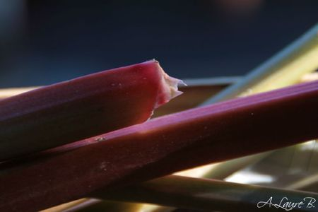 rhubarbe 123 copie