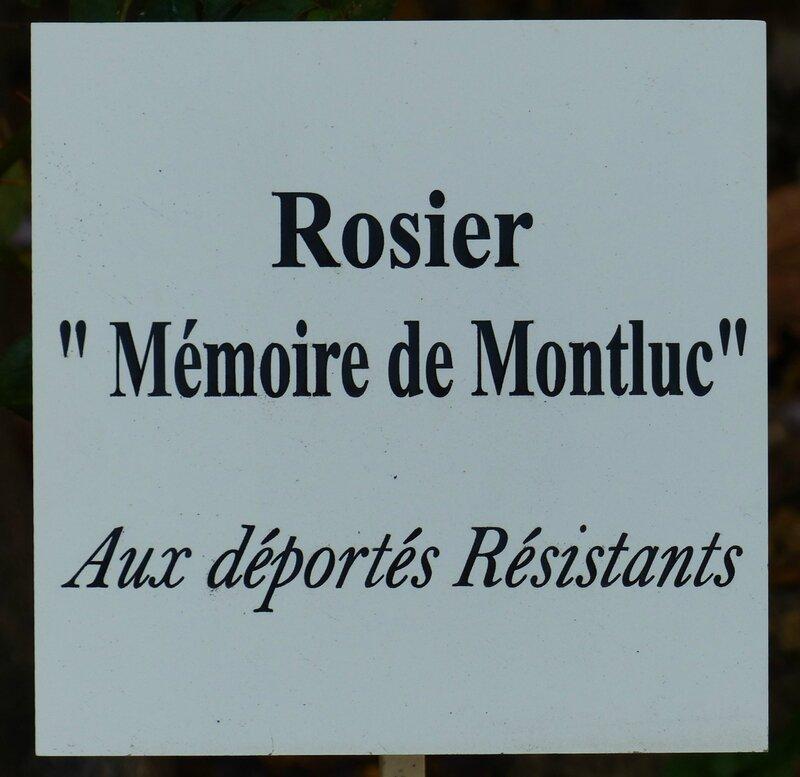 rosier Mémoire de Montluc-Guillot (1)