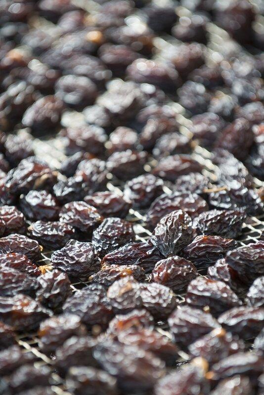 des prunes d'ente aux pruneaux (15)