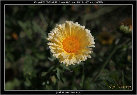 2011_08_18_043
