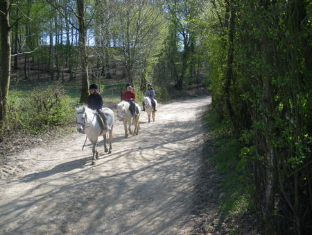 cheval_montcy04_10_044