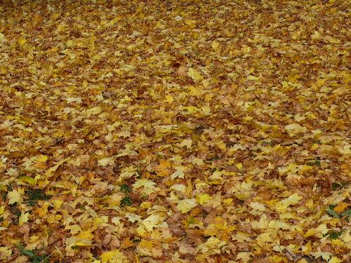 2008 10 17 Des feuilles d'automne