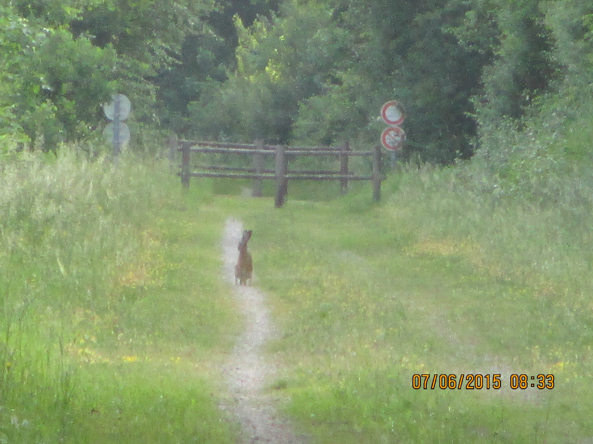 ce matin de bonne heure et de bonne humeur,une balade en vélo toujours dans mon chemin ,le lièvre et la tortue.. l!!