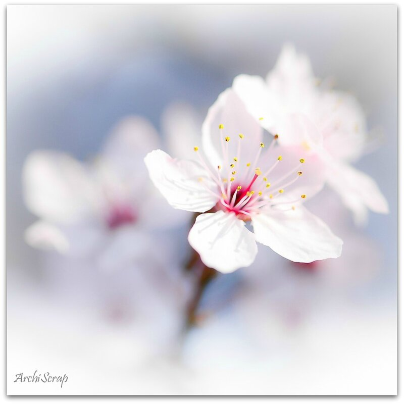 Fleurs mars 2014 RED-32