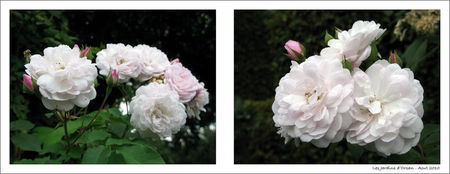Les_jardins_d_orsan_12_Blog