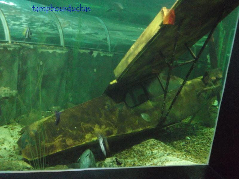 l aquarium de touraine d 233 s le tambour du chas