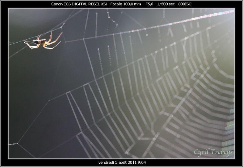 l araign 233 e qui tisse sa toile le pays des sucs haute loire et ard 232 che et ailleurs photos