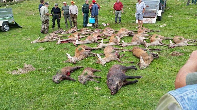 La chasse dans les Pyrénées, conduite à tenir
