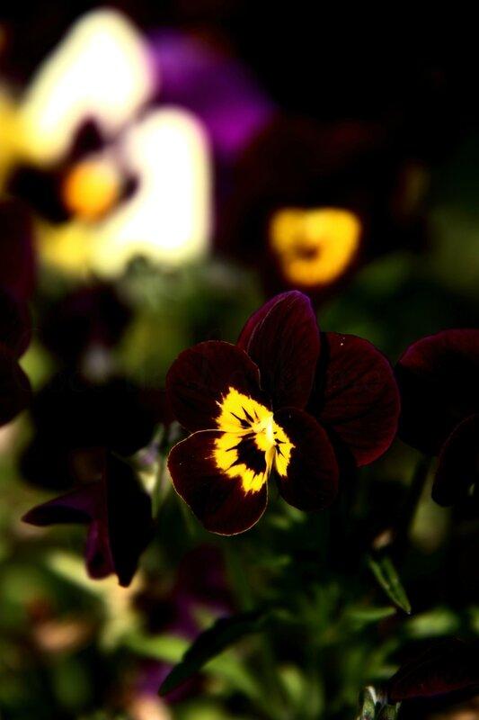 Fleurs de mams (2)