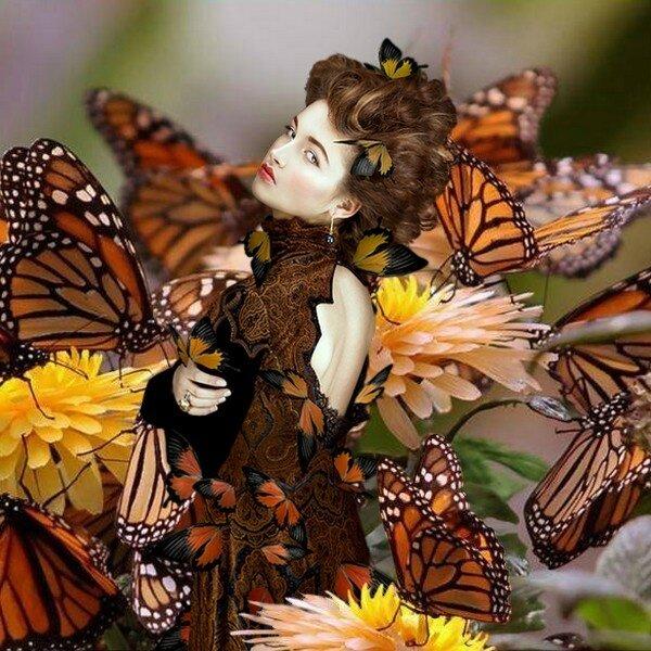 Retour des papillons