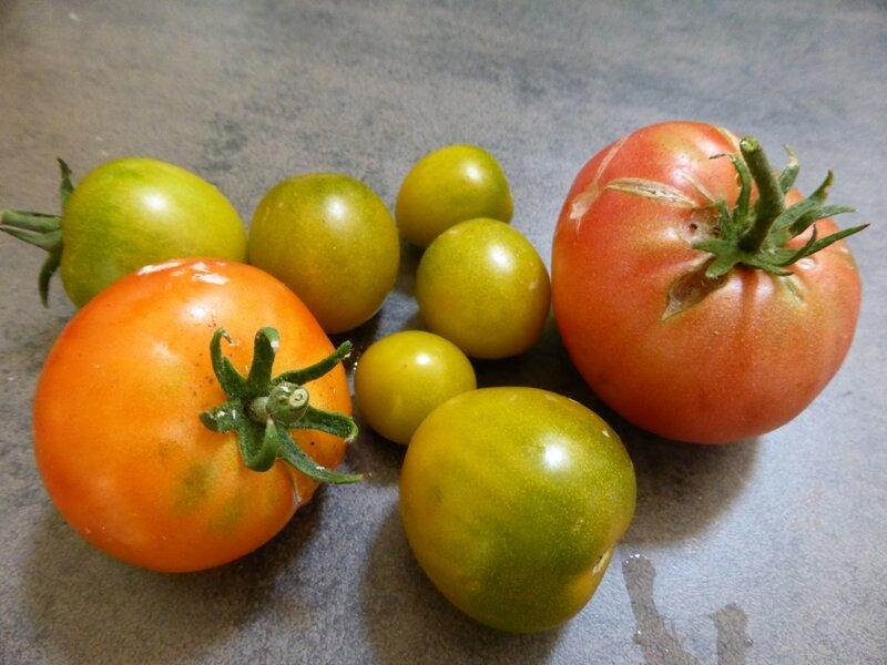 11-ratatouille-tomates
