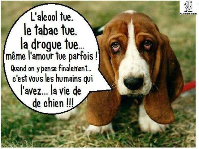 ob_ad45d708a22fca36f716cc3c1e7ae4fb_humour-drole-animaux
