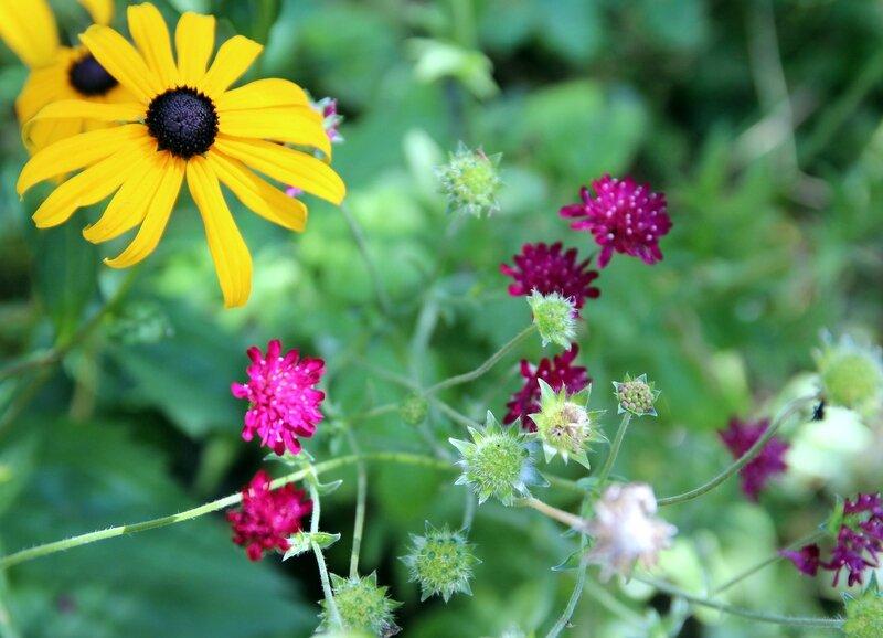 les fleurs du jour dans mon jardin
