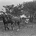 Ww1 : femmes et chevaux