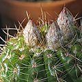 Cactus 2016-2