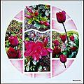 Fleurs printanières - azalée et tulipes