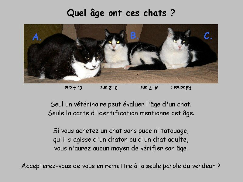 Comment avoir un chat - Comment rendre propre un chaton ...