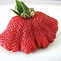 Oh la belle fraise de Bayonne !