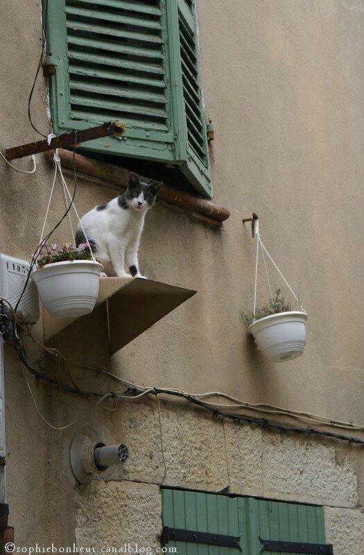 vrai chat