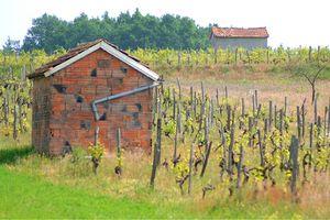 Cabanes de vigne Pont d'Agris Mai 2011 (4)