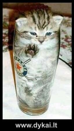 kittininglass